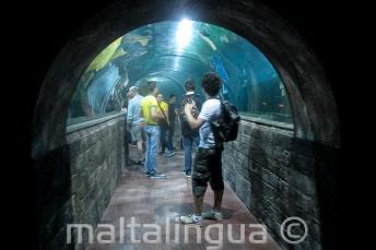 Студенты в туннеле аквариума